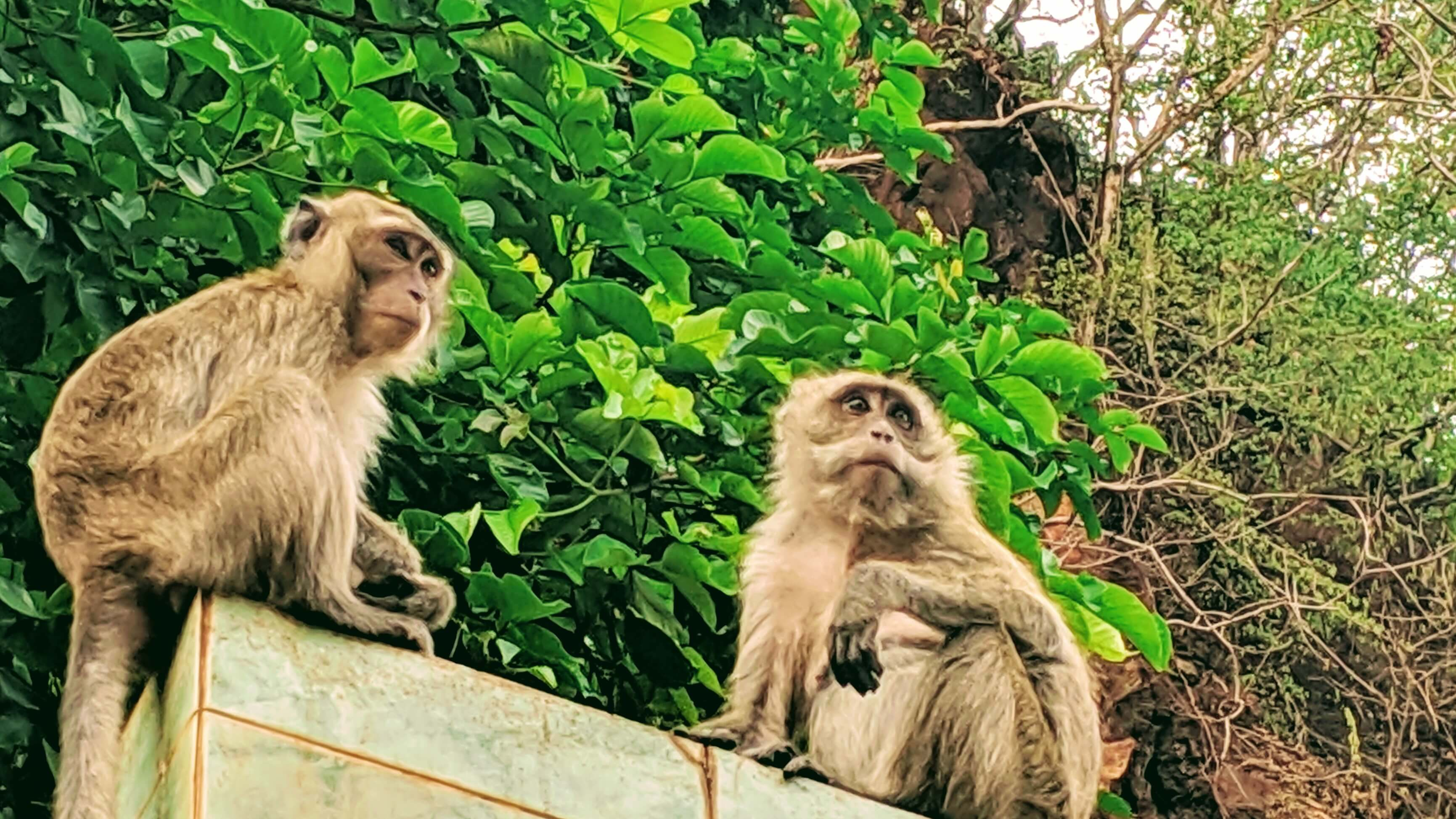 2 monkeys sitting on a rooftop, guarding over Wat Tham Sua.